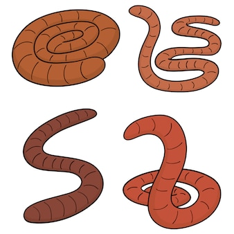 Set worm