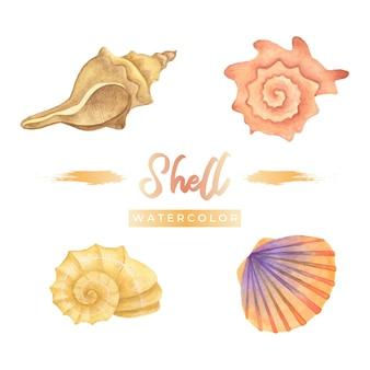 Shell aquarel ontwerp illustratie
