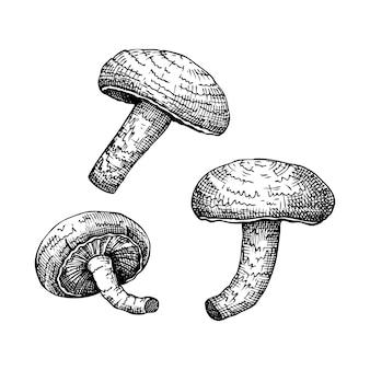 Shiitake. adaptogene paddestoel handgetekende illustraties set.