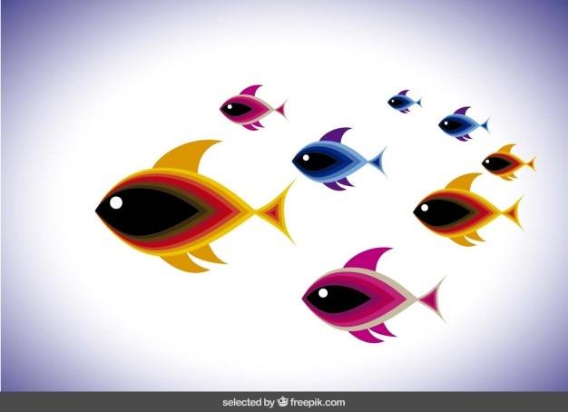 Shoal met kleurrijke vissen