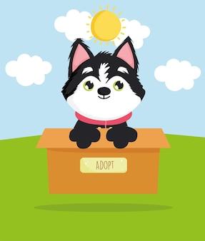 Siberische hond op doos