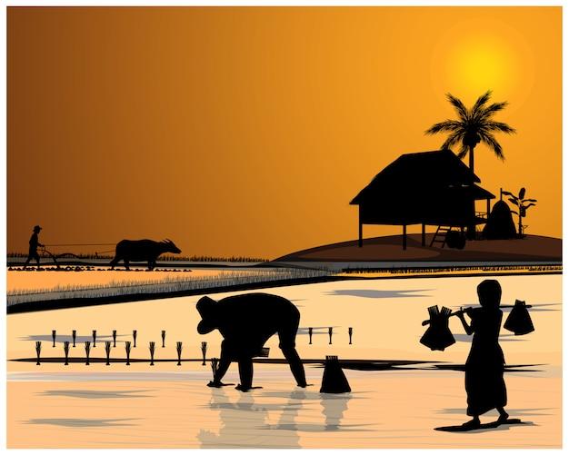 Silhouet boer op rijstveld