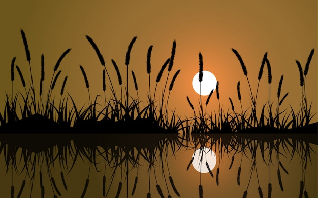 Silhouet van gras in zonsondergang met reflectie