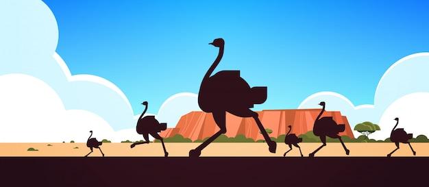Silhouet van het runnen van wilde dieren struisvogels australische landschap aard van australië fauna fauna concept horizontaal