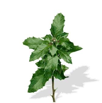 Silhouet van planten. vectorillustratie. eps10