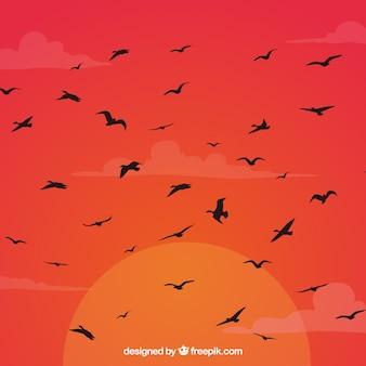 Silhouet vliegende vogel achtergrond