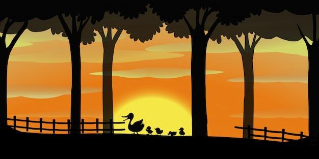 Silhouetachtergrond met eenden op de boerderij