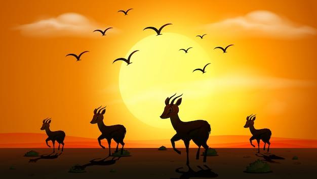 Silhouetscène met gazellen die bij zonsondergang lopen