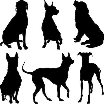 Silhouetten van honden in verschillende poses