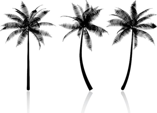Silhouetten van palmbomen