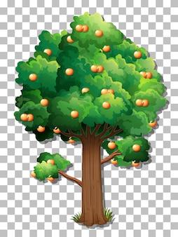 Sinaasappelboom op transparante achtergrond
