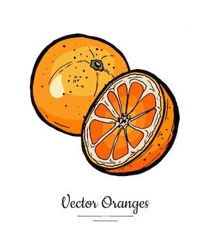 Sinaasappelen instellen vector geïsoleerd. hele, half gesneden sinaasappel, plakjes. fruit hand getekende set.