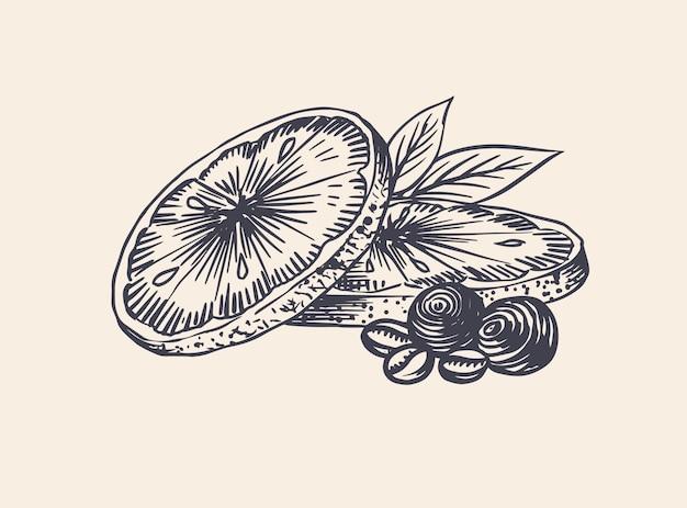 Sinaasappelschijfjes. zomer fruit . gegraveerde hand getekende vintage schets. houtsnede stijl.