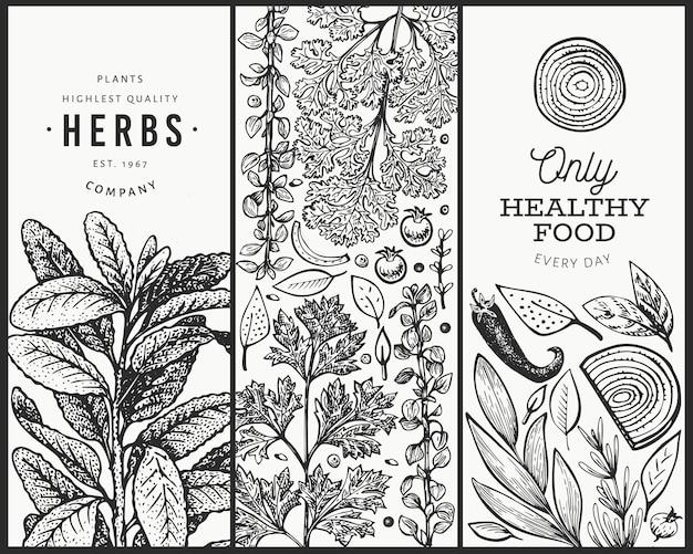 Sjabloon voor spandoek van keukenkruiden. hand getekend vintage botanische illustratie. gegraveerde stijl. vintage voedsel achtergrond.