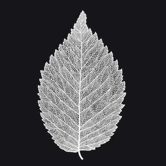 Skeletonized blad op een zwarte achtergrond