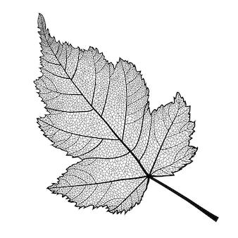 Skeletonized blad van een struik op een witte achtergrond