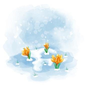 Sleutelbloemen oranje tulpen of krokussen bloeien onder de laatste sneeuw.