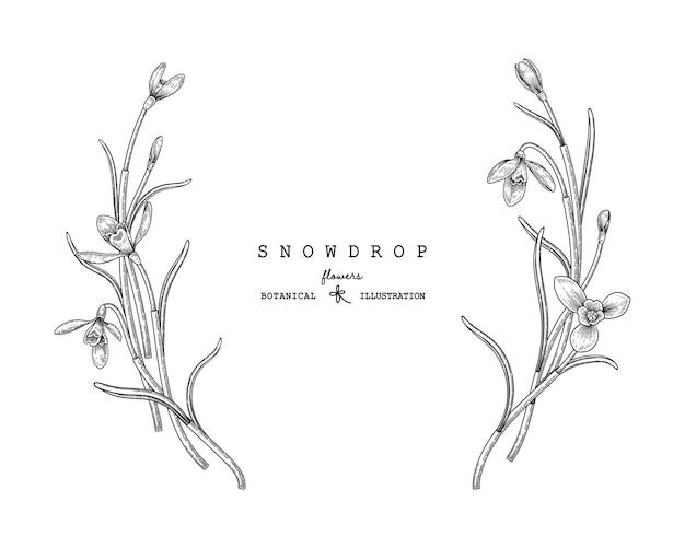 Sneeuwklokje bloem hand getrokken decoratieve vector.