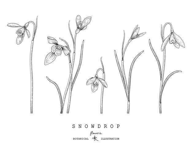 Sneeuwklokje bloemtekeningen
