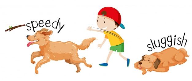 Snelheid en trage hond