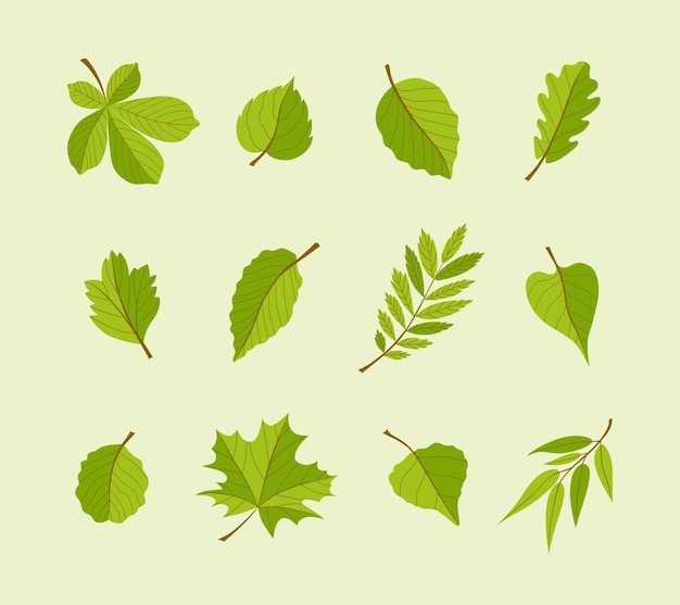 Soorten bladeren - moderne vector platte ontwerp iconen set. een grote variëteit van verschillende bomen. gebruik deze hoogwaardige pictogrammen om uw ansichtkaarten, banners, flyers, illustraties en presentaties te versieren.