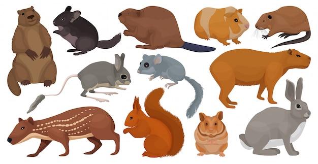 Soorten knaagdieren cartoon ingesteld pictogram.