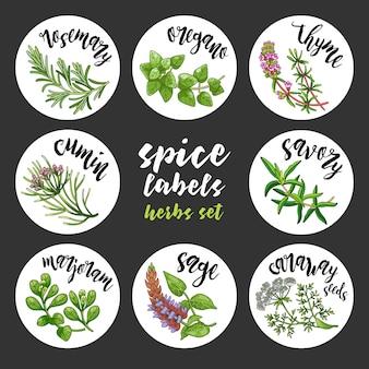 Specerijen en kruiden labels. gekleurde vector kruiden set