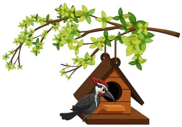 Specht die in vogelhuis leeft