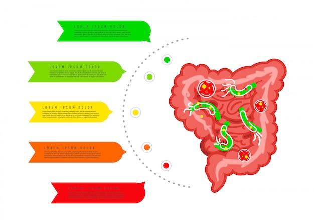 Spijsverteringskanaal met bacteriën, virussen.