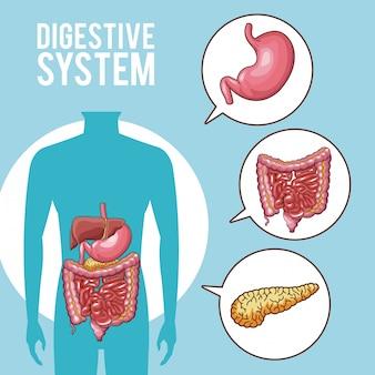 Spijsverteringsstelsel menselijke organen