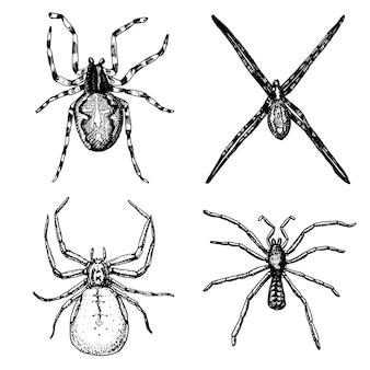 Spin of spinachtige soort, gevaarlijkste insecten ter wereld, oude vintage voor halloween of fobieontwerp. handgetekende, gegraveerde mag gebruiken voor tatoeage, web en vergiftigen zwarte weduwe, tarantula, birdeater