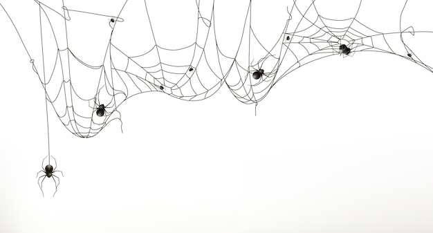 Spinnen en spinnenweb, vector set