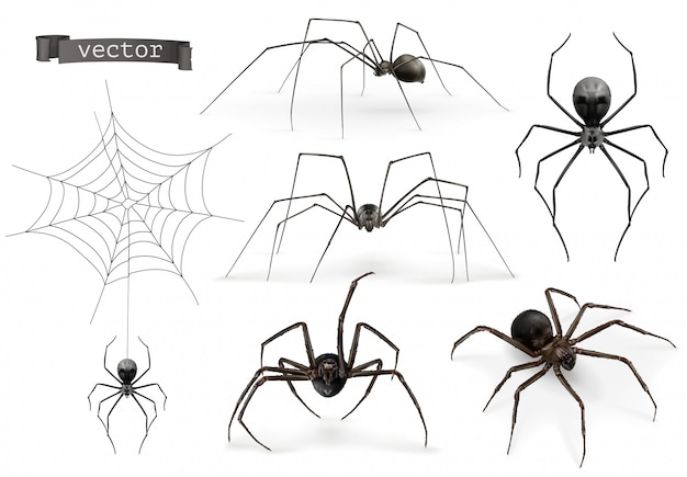 Spinnen. halloween-teken, spinnenweb