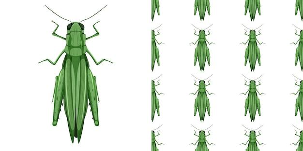 Sprinkhaaninsecten geïsoleerd en naadloos patroon