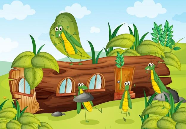Sprinkhanen en een huis