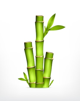 Stam van bamboe