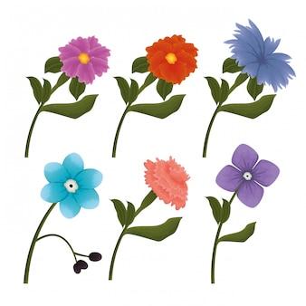 Stel bloemen prachtige pictogrammen