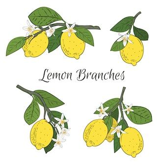 Stel een verzameling takken met citroenen in