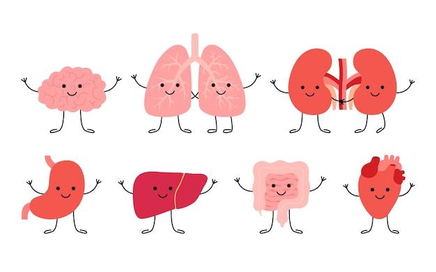 Stel gelukkig mens gezonde organen hersenen longen nieren maag lever darm darm hart organen