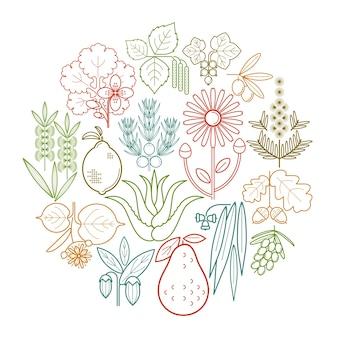 Stel medische kleurkruiden in een cirkel. bes, olijf, jeneverbes, stinkende gouwe, salie, avocado, arnica, acacia, limoen, theeboom, eik, duindoorn, eucalyptus, berk, citroen, aloë, jojoba.