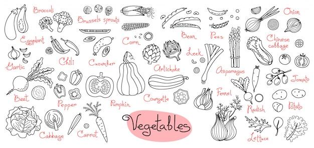 Stel tekeningen van groenten in voor ontwerpmenu's, recepten en pakketproducten