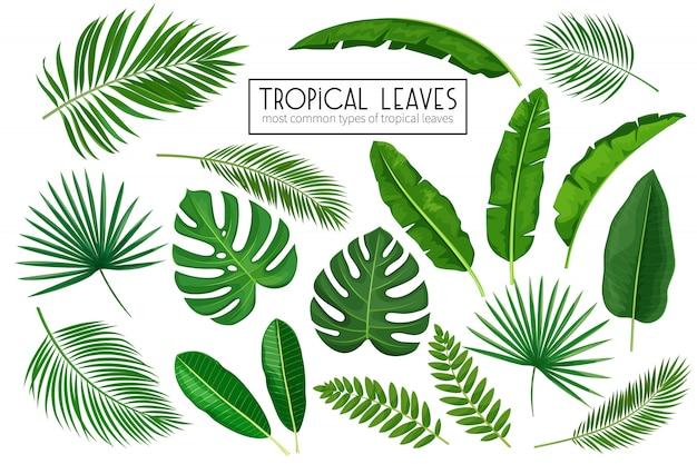 Stel tropische bladeren in