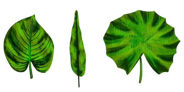 Stel tropische bladeren in.