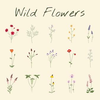Stel verzameling van wilde bloemen