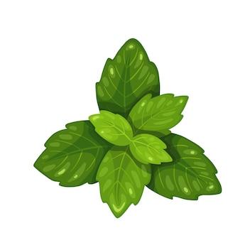 Stelletje groene basilicum, vegetarisch eten, gezond menu. kruidenkruiden, salade en maaltijden. geïsoleerde vectorillustratie in cartoon-stijl.