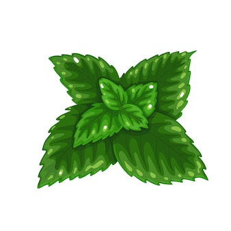 Stelletje groene munt, vers vegetarisch eten, gezond menu. groeiende kruiden, salade en maaltijden. aromatisch kruideningrediënt. geïsoleerde vectorillustratie in cartoon-stijl.