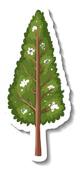 Sticker groenblijvende boom op witte achtergrond