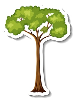 Sticker regenwoud boom op witte achtergrond