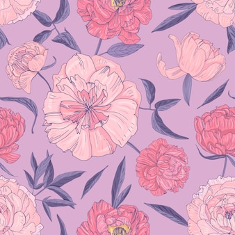 Stijlvol naadloos patroon met mooie bloeiende pioenrozen op paarse achtergrond.