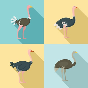 Struisvogel iconen set, vlakke stijl